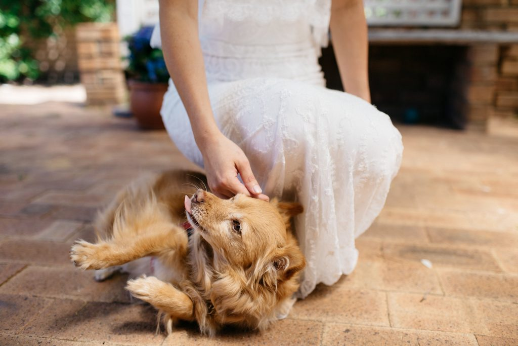 Bride and dog, Perth Kings Park Wedding